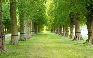 What are the advantages of Trees?